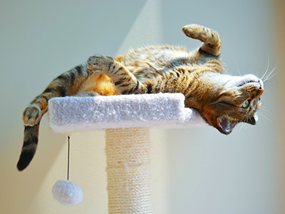 Cat laying on a cat tree
