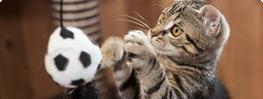 cat-boarding-box