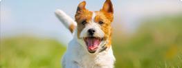 dog-daycare-box
