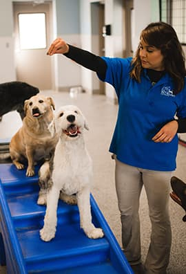 Trainer teaching dogs patience