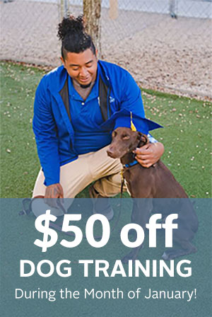 $50 off dog training during the month of january